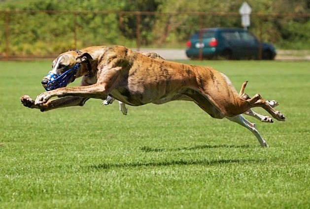 Djinn race stretchWA